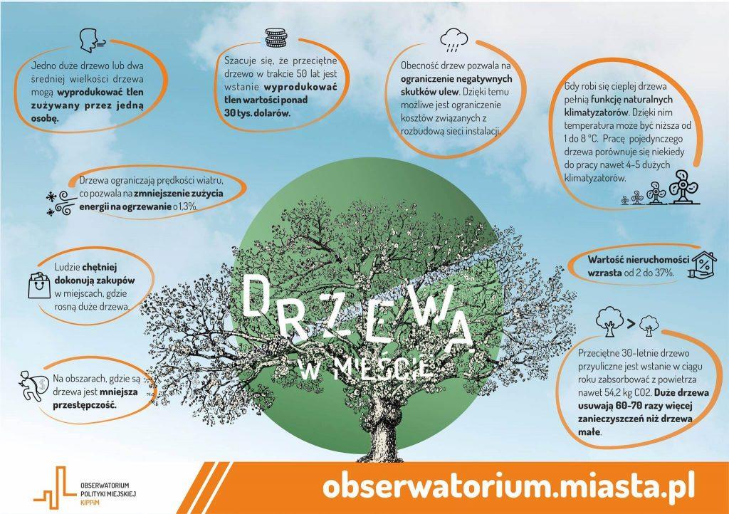drzewa w mieście_zielony kapitał miast_co nam dają drzewa_ile tlenu_korzysci