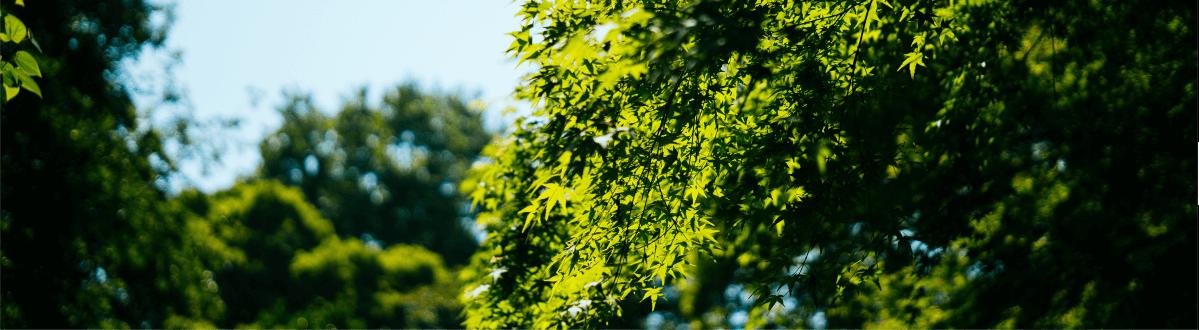 raport nik zieleń samorządy gminy miasta jak zarządzają ile wycinają